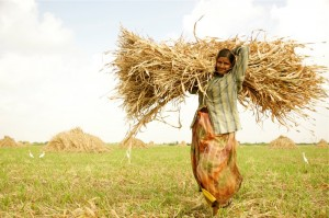 Farmer/Gujarat